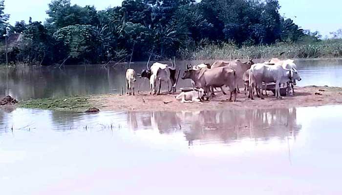 লালপুরে আরও ২ গ্রাম প্লাবিত, পানিবন্দি ৫ হাজার মানুষ