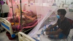 ডেঙ্গু আক্রান্ত হয়ে আরও ২ মৃত্যু, ২১৪ জন হাসপাতালে
